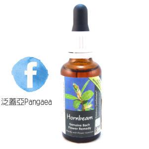 厚生花精-鵝耳櫪(大) Hornbeam 30ML