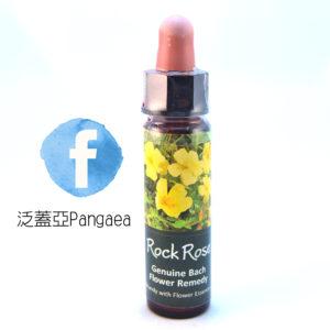 厚生花精-岩玫瑰 Rockrose 10ml