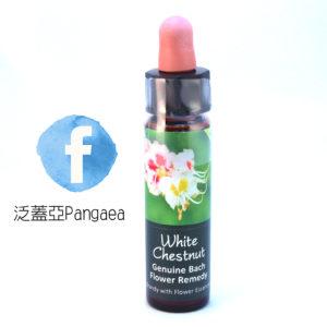厚生花精-白栗 White Chestnut 10ml