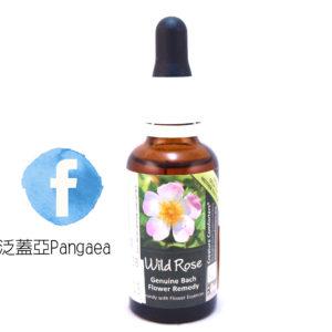 厚生花精-野玫瑰(大) Wild Rose 30ML