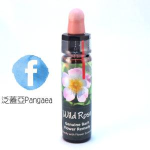 厚生花精-野玫瑰 Wild Rose 10ml
