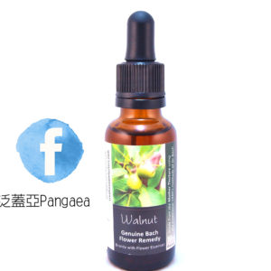 厚生花精-胡桃(大)Walnut 30ML