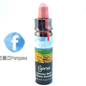 厚生花精-荊豆Gorse 10ml