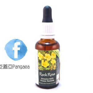 厚生花精-岩玫瑰 Rock Rose 30ML